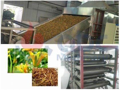 1000kg citron daylily belt dryer