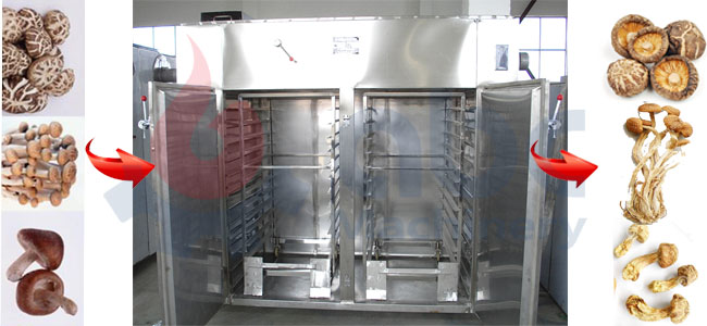 Mushroom Dryer Machine
